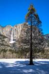 Winter Yosemite Meadow by T.M. Schultze