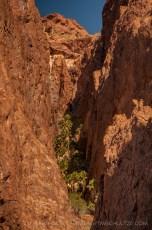 Palm Canyon Hideaway