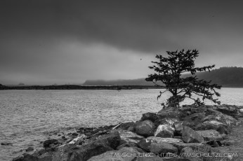 Second Beach, La Push, Black and White