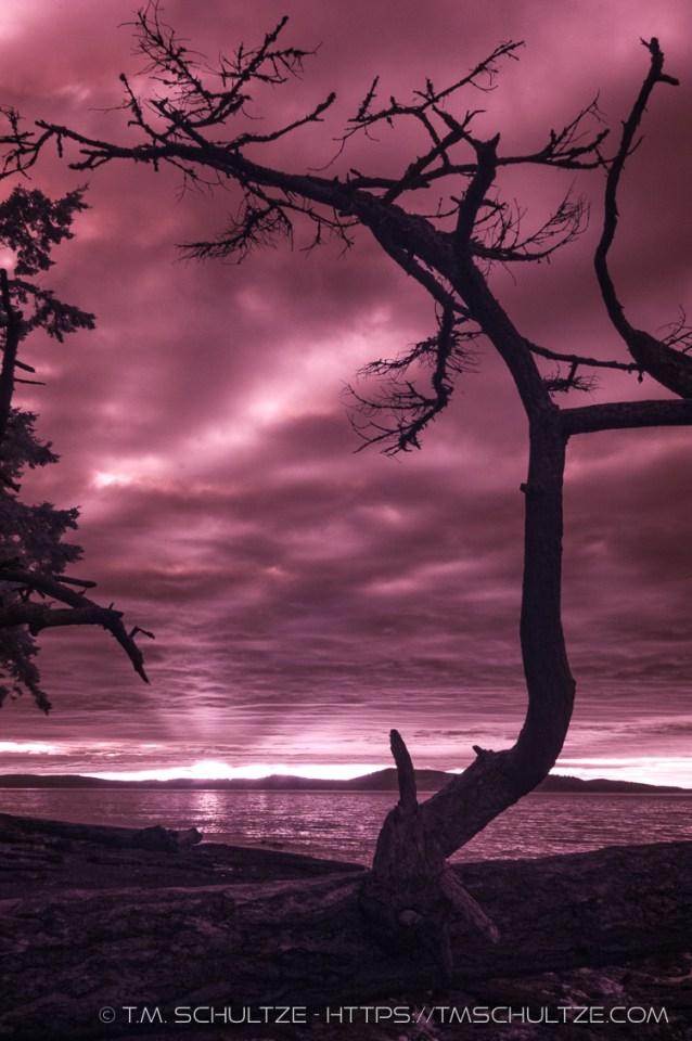 Washington Park Anacortes, Infrared, by T.M. Schultze
