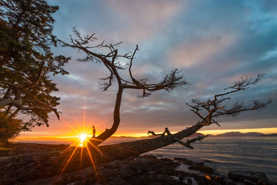 Washington Park Sunset by T.M. Schultze