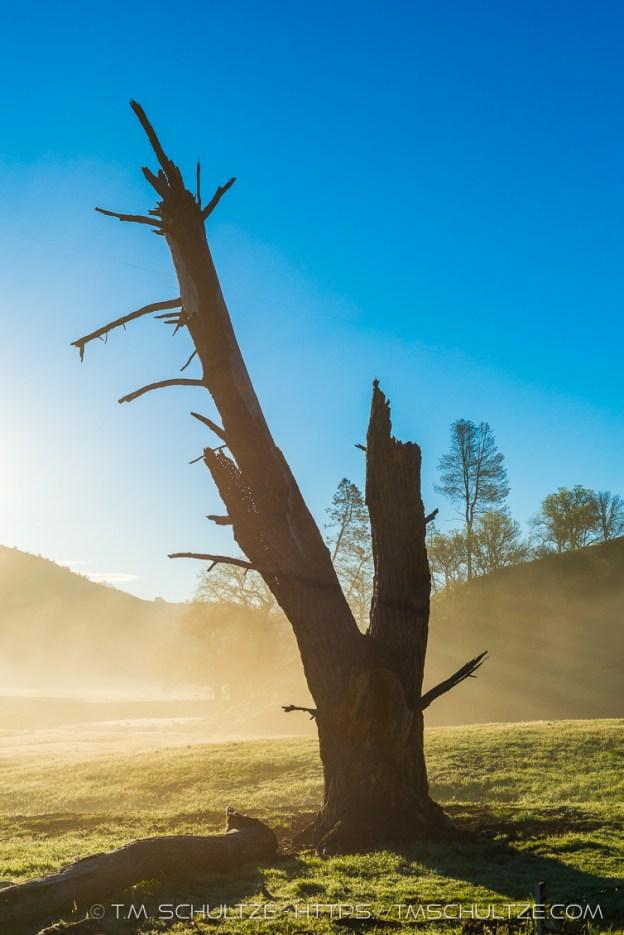 Dead Tree in Sunrise Mist by T.M. Schultze