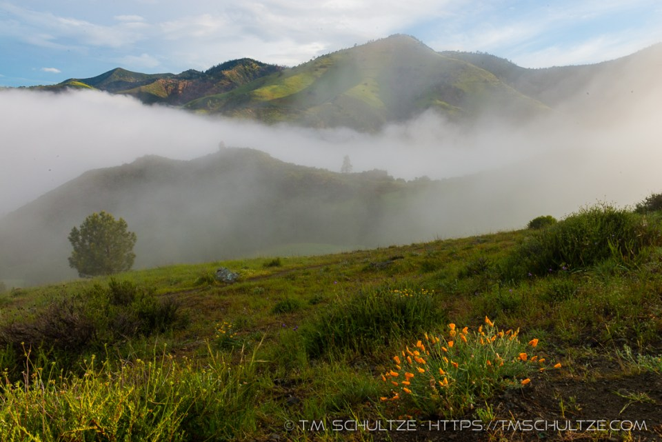Figueroa Mountain Clouds and Poppies by T.M. Schultze