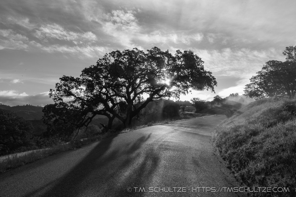 Lone Oak, Figueroa Mountain, Black and White, by T.M. Schultze