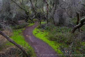 A Windy Path by T.M. Schultze, Favorite Photographs of 2017