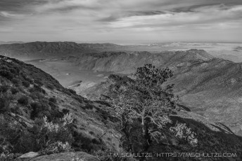 Pinyon Point, May 2017, Black and White