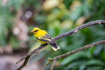 It's A Yellow Bird
