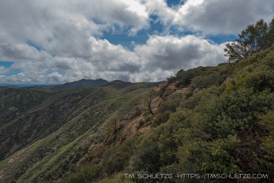 Pinyon Hillside by T.M. Schultze