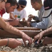 volunteers sifting