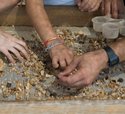 Hands sifting over a sifting net