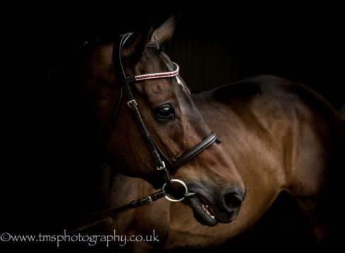 Equine_thoroughbred