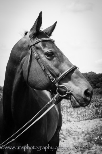 Mono_equine_photography