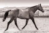 Vintage_equine