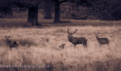 Red Stag_vintage