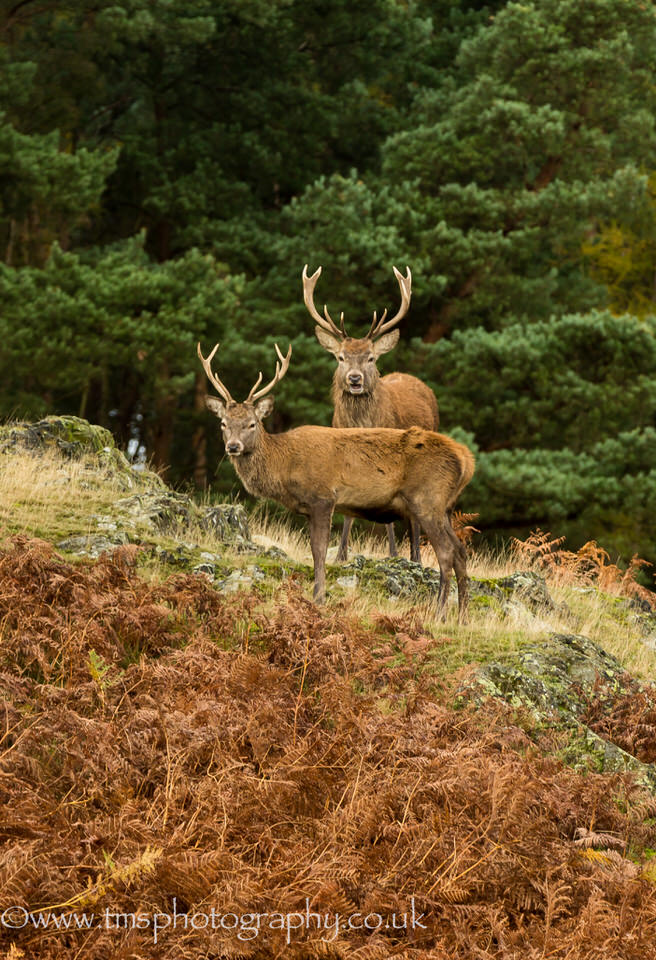 Red Stags_BradgatePark