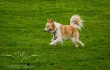 Dog Photography-16-1