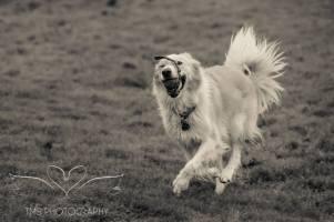 Dog Photography-18-1