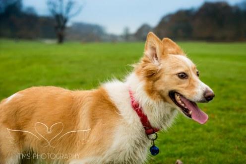 Dog Photography-23-1