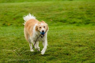 Dog Photography-26-1