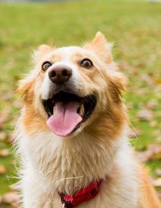 Dog Photography-29-1