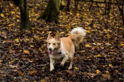 Dog Photography-46-1