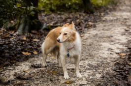Dog Photography-51-1