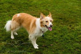 Dog Photography-7-1