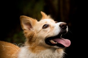 Dog Photography-70-1