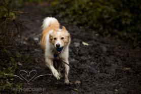 Dog Photography-73-1