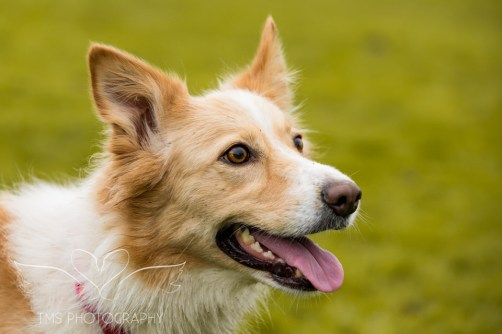 Dog Photography-78-1