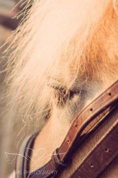 Girl_pony_Photoshoot_Aron-18