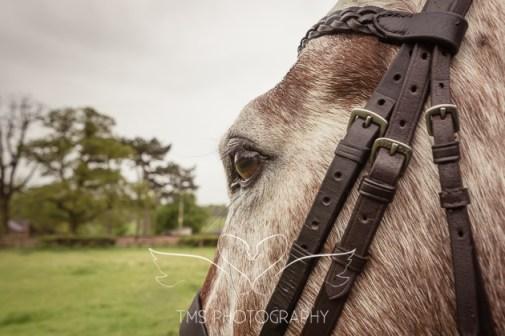 EquinePhotographer_Derbyshire-20