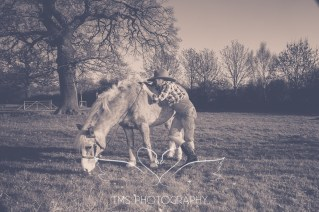 equinephotography_Derbyshire-21