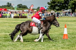 AshbyShow2015_Photography (6 of 67)