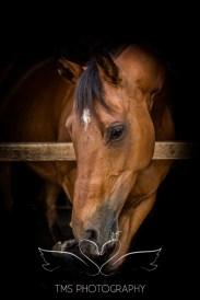 Equine_Photography_DerbyshireTMSPhotography-33