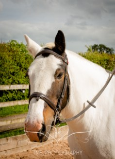 Equine_Photography_DerbyshireTMSPhotography-36