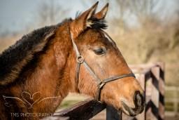 equinephotographer_Derbyshire-16