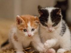 Kittens_photos (3 of 21)