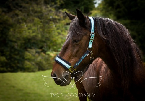 equinephotographer_Leicestershire-12