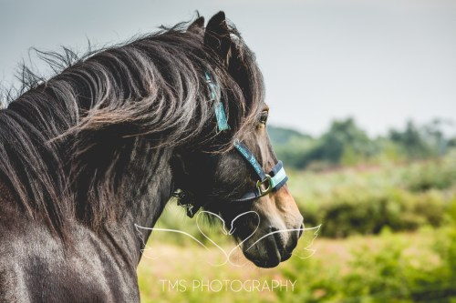 equinephotographer_Leicestershire-51