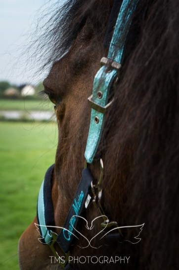 equinephotographer_Leicestershire-9
