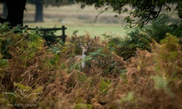 bradgatepark_photography-9-of-34