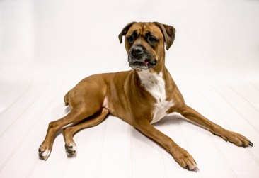 dog_photographer_leicestershire-12