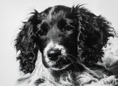 dog_portraits_photographer_leicestershire-55
