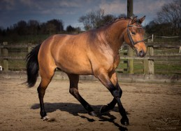 Horse_photographer_Derbyshire-11