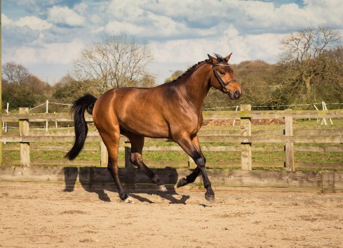 Horse_photographer_Derbyshire-23