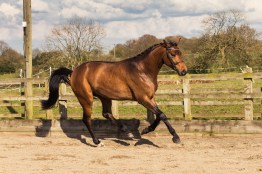 Horse_photographer_Derbyshire-24