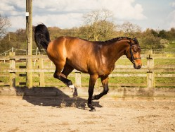 Horse_photographer_Derbyshire-31