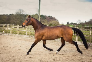 Horse_photographer_Derbyshire-7