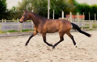 Horse_photographer_Derbyshire-8